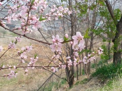 Intimate blossoms