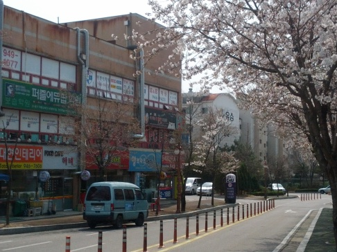 There are blossoms on the trees in Paju!