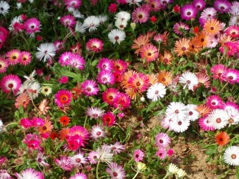 Flowers! Ilsan Park