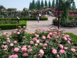 Ilsan Rose Garden