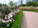 Rose Garden in Ilsan
