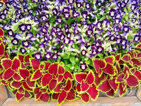 FlowersinSeoul