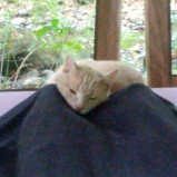 Cat Reiki
