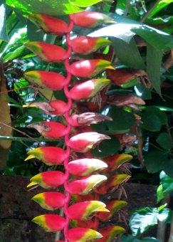 flowersofthailand