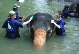 In Thailand giving Mina the elephant a bath
