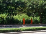 Monks Walking Chiang Mai