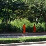 Monks Walking Chiang Mai