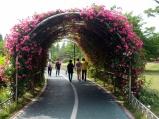 South Korea Rose Garden