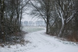 Winter In Wettenbostel, Germany